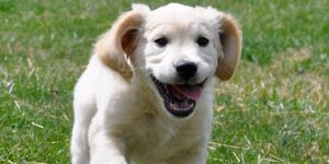 Tips On How To Train A Domestic Animal